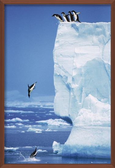 Poster Penguins - steve bloom