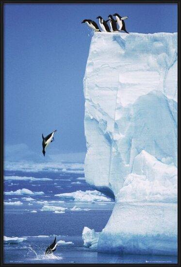 Poster  Penguins - steve bloom