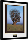 Pink Floyd - Tree